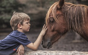 Picture mood, horse, boy