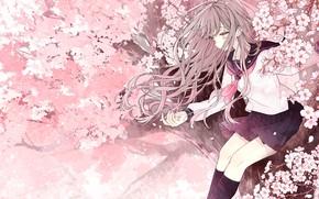 Picture girl, flowers, tree, Sakura, on the tree