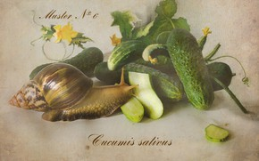 Picture snail, vegetables, cucumbers, botany, Achatina, Botanical album, the watercolor drawing