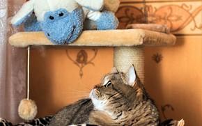 Picture cat, cat, look, face, pose, grey, room, wall, Wallpaper, toy, portrait, shelf, lies, plaid, basket, …