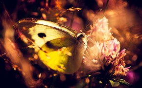 Picture BUTTERFLY, WINGS, PROBOSCIS, FLOWER, INSECT, LEGS