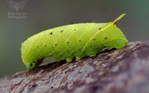 Picture caterpillar, background, green