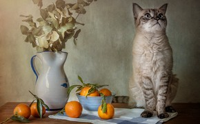 Picture cat, cat, bouquet, oranges, pitcher, sitting