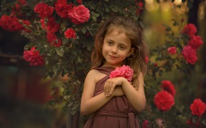Picture summer, flowers, nature, Bush, roses, girl, child, Chudak Irena