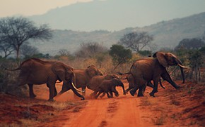 Picture Africa, elephants, the herd