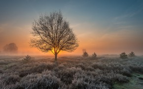 Picture frost, field, tree, dawn, morning