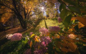 Wallpaper autumn, forest, the sun, light, trees, flowers, branches, nature, Park, glade, foliage, pink, the bushes, ...