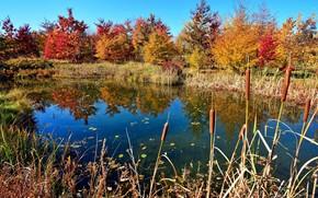 Wallpaper autumn, trees, lake, the reeds