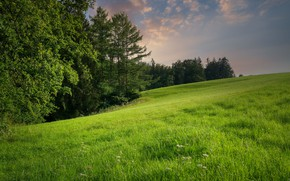 Picture forest, summer, grass, slope, meadow
