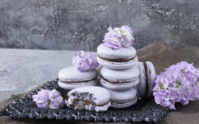 Picture flowers, flowers, violet, macaron, macaroon