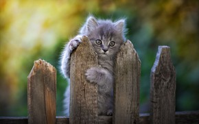 Picture background, the fence, baby, kitty