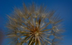 Picture the sky, dandelion, macro flowers nature