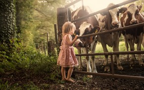 Picture the fence, cows, girl, cattle
