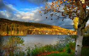 Picture autumn, landscape, nature, lake, tree, Canada, birch, forest, Bank, QC