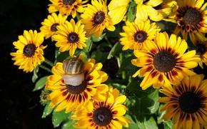 Picture flowers, macro, light, garden, snail, Bush, gazania