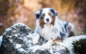 Picture winter, autumn, look, face, snow, nature, pose, stones, background, paws, puppy, lies, blue eyes, bokeh, …