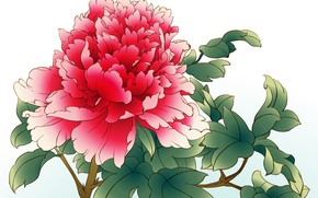 Picture flower, leaves, white background, peony, red peony