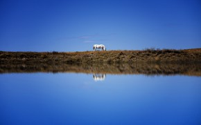 Picture white, the sky, reflection, blue, horse, shore, horse, pond