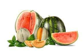 Picture leaves, white background, watermelons, melon