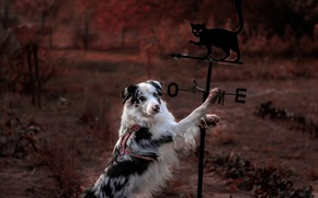 Picture autumn, cat, cat, nature, pose, Park, background, black, dog, post, paws, garden, arrow, spinner, stand, …