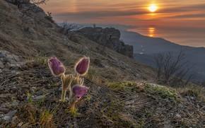 Picture sunset, sleep-grass, Vladimir Ryabkov