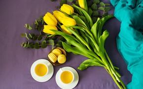 Picture tea, bouquet, tulips, macaroon