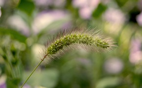 Picture macro, nature, spike