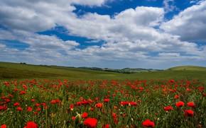 Picture field, summer, the sky, clouds, flowers, blue, hills, Maki, meadow, red, al, poppy field