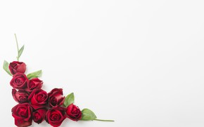 Picture white, flowers, background, roses, red, Red, buds, roses, decoration