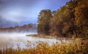 Picture autumn, fog, lake