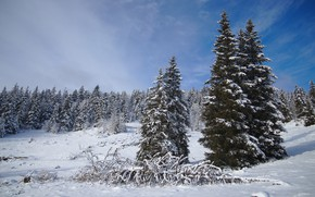 Picture winter, forest, the sky, clouds, snow, blue, ate, the snow, snowy, a fallen tree