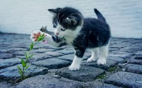 Picture flower, kitten, cat, kitty, feline