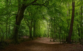 Picture trees, photo, foliage