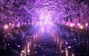 Picture water, the evening, Sakura, flowering