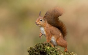 Picture pose, background, moss, protein, animal, squirrel