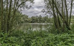 Picture landscape, nature, river, beauty, krepieva