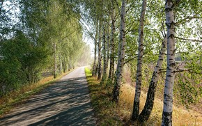 Picture road, greens, field, summer, light, trees, branches, Park, the way, mood, foliage, spring, track, shadows, …