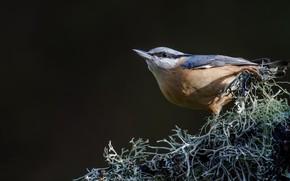 Picture background, bird, bird, Jay
