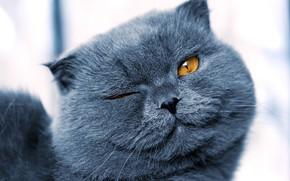 Wallpaper cat, close-up, muzzle, bokeh, winks