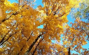 Picture the sky, Trees, autumn leaves