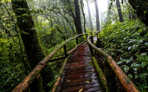 Picture forest, trees, nature, rain, track