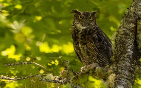 Picture branches, owl, bird, foliage, owl