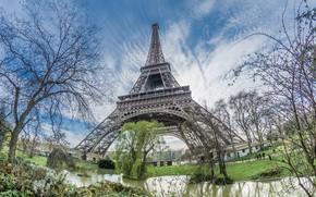 Picture trees, Paris, tower