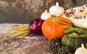 Picture autumn, corn, bow, fruit, pumpkin