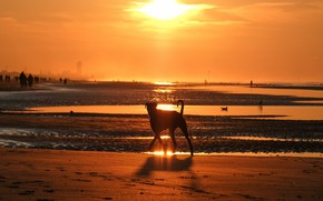 Picture sea, beach, light, landscape, sunset, nature, shore, dog, the evening, silhouette, walk, pond