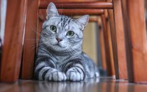 Picture cat, mustache, look