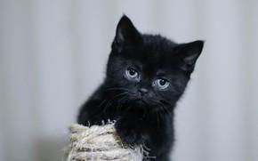Wallpaper mustache, look, kitty, black, baby