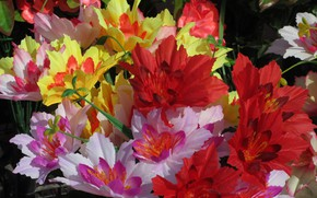 Picture Flowers, Red, Yellow, White, artificial flowers, Mamala ©, Spring 2018