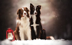 Picture snow, dogs, a couple, bokeh, two dogs, lantern