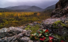 Picture autumn, forest, leaves, mountains, fog, stones, rocks, vegetation, gloomy sky